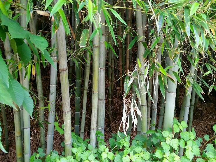 청암체육공원-평촌마을(대밭)