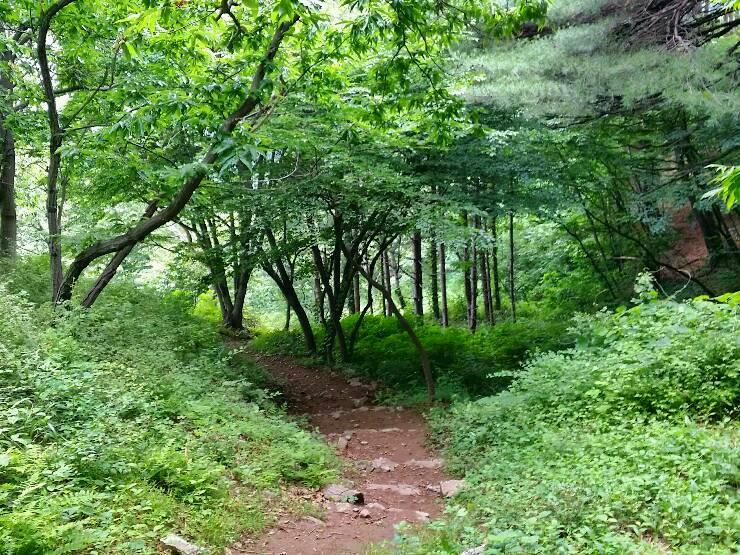 존티재 아래 숲길