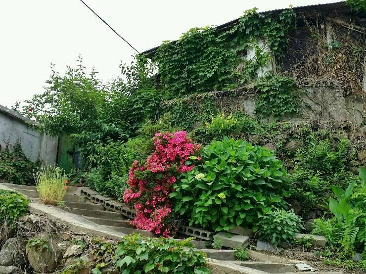담쟁이 넝쿨과 꽃